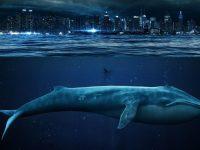 """Смертельной игрой """"синий кит"""" начали активно интересоваться подростки Германии"""