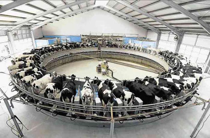 Сократите производство молока в ЕС и мы выделим 500 млн евро, — Кристиан Шмидт