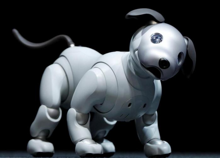 Sony возобновляет разработку роботизированной собаки AIBO