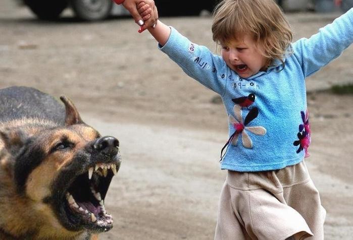 собака, ребенок, застраховать собаку, страхование животных в Украине, страхование домашних животных, страховка собак, ветеринарное страхование, страховая компания страхование ответственности владельцев собак, домашние животные