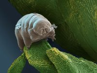 Ученые назвали организм, способный дожить до «конца света»