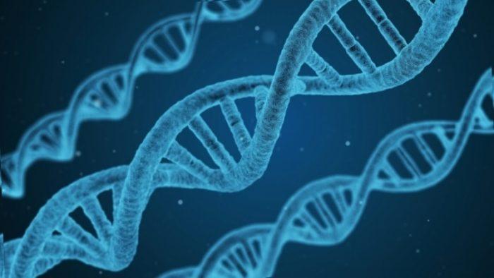 Ученые обнаружили мутантный ген сладкоежек