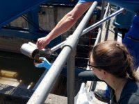 Ученые обнаружили золото в сточных водах Швейцарии