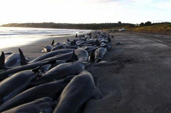 Ученые выяснили причины массовых убийств китообразных