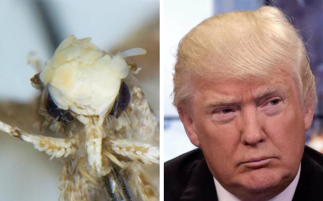 Ученый Вазрик Назари назвал новый вид моли в честь Трампа