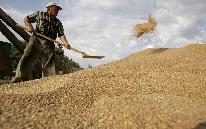 Украинские аграрии увеличили экспорт на 16%