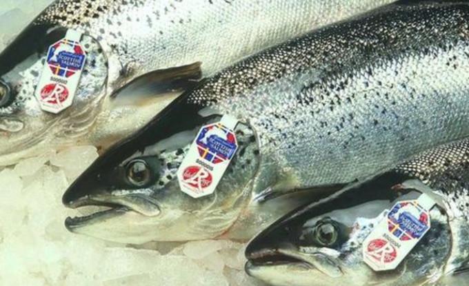 В 2017 году рекордно увеличился экспорт шотландского лосося