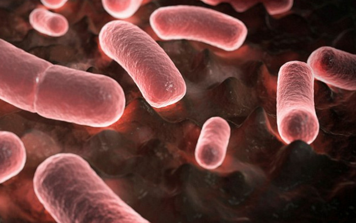В двух округах американского штата Аризоны обнаружена чума