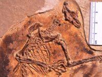 В эпоху динозавров млекопитающие летали по воздуху, – ученые