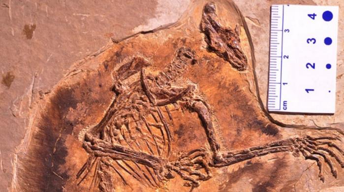 В эпоху динозавров млекопитающие летали по воздуху, - ученые