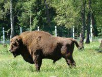 В ЕС могут заставить Польшу заплатить за вырубку девственного леса