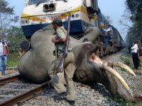 ВИндии пять слонов сбил поезд