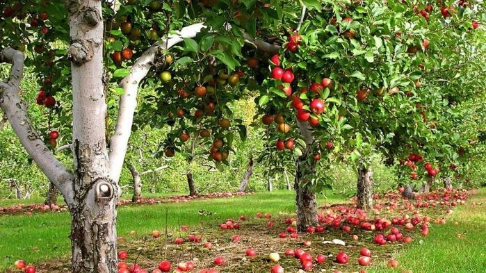В Малайзии решили покупать украинские помидоры и яблоки