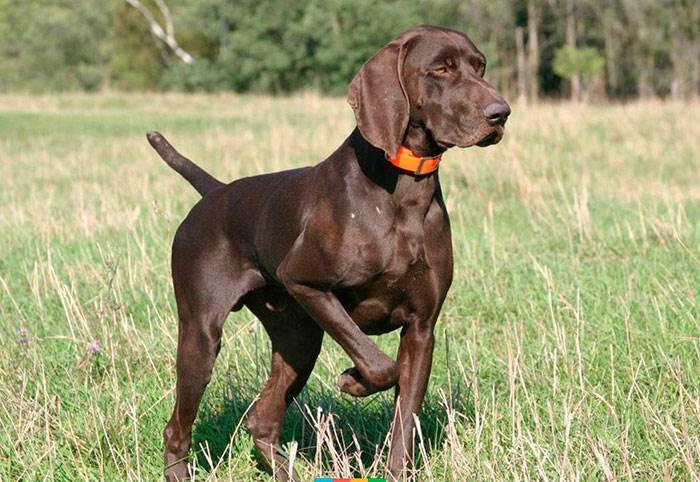 В России собака на охоте выстрелила в человека