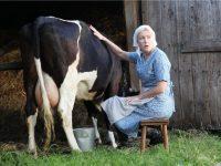 В Украине под запрет попало домашнее молоко (инфографика)