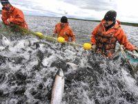 """В Украине проведут масштабную """"рыбную приватизацию"""""""