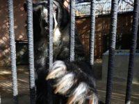 В зоопарках Венесуэлы животные умирают от голода