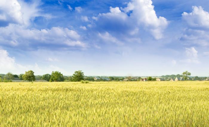Верховная Рада отказалась снимать мораторий на продажу земли