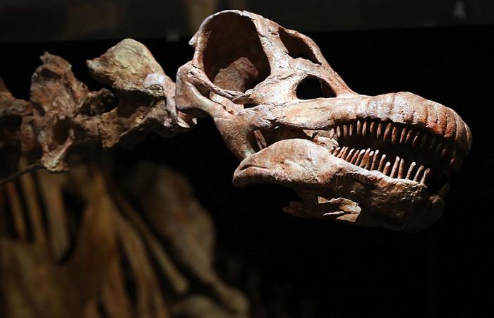 Вес недавно открытого динозавра превышал массу семи слонов, - ученые