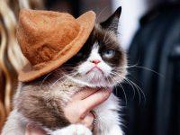 Владельцы сердитого кота отсудили у компании Grenade $710 тысяч