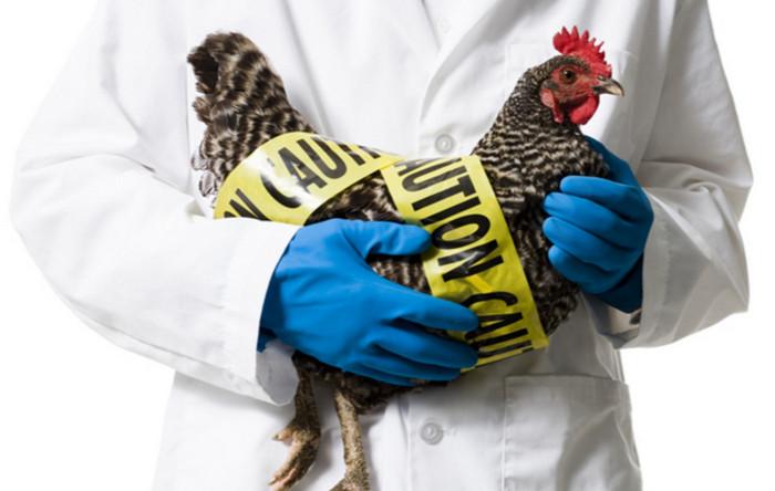 Вспышка птичьего гриппа в Германии: убито более 500 000 инфицированных птиц