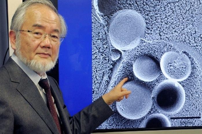 Японец Есинори Осуми стал лауреатом Нобелевской премии по медицине