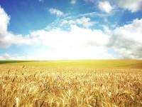 Бизнес-идея: продажа зерна