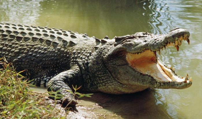 Журналист Financial Times погиб в результате нападения крокодила